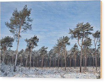 Winter Forest Covered With Snow Wood Print by Dirk Ercken
