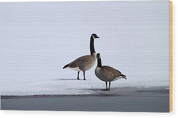 Winter Geese Wood Print by Michael Sokalski