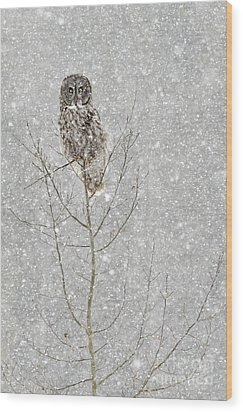 Winter Ghost Wood Print by Dee Cresswell