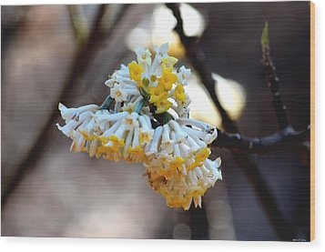 Winter Gold Wood Print by Maria Urso