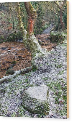 Winter In The Woods Wood Print by Adrian Evans