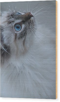 Winter Kitty Wood Print