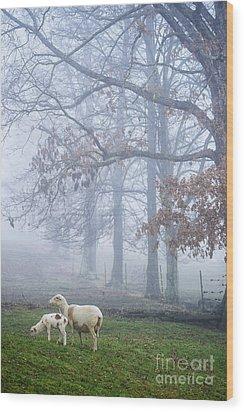 Winter Lambs And Ewe Foggy Day Wood Print by Thomas R Fletcher