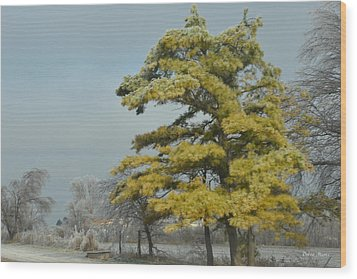 Wood Print featuring the photograph Winter Landscape by Debra Martz