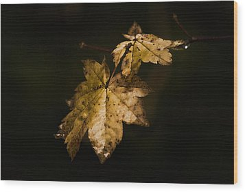 Winter Leaves Wood Print by Ron Roberts