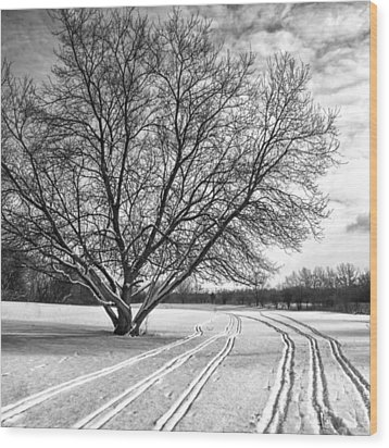 Winter Lines Wood Print by Lauri Novak