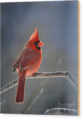 Winter Morning Cardinal Wood Print by Nava Thompson
