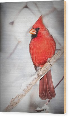 Winter Northern Cardinal Wood Print by Jana Thompson