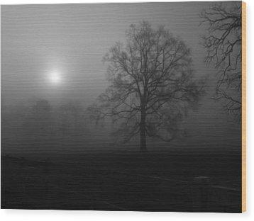 Winter Oak In Fog Wood Print