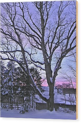 Winter Oak 2 Wood Print