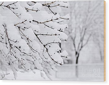 Winter Park Under Heavy Snow Wood Print by Elena Elisseeva