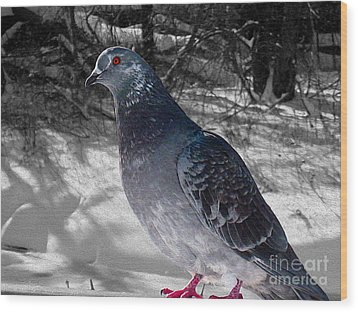 Wood Print featuring the photograph Winter Pigeon by Nina Silver