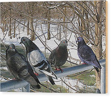 Winter Pigeon Party Wood Print by Nina Silver