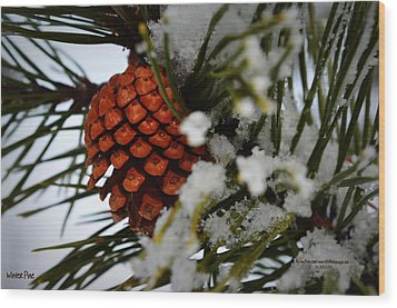 Wood Print featuring the photograph Winter Pine by Guy Hoffman