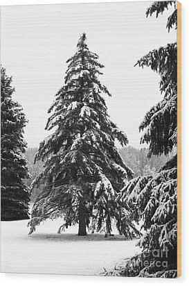 Winter Pines Wood Print by Ann Horn