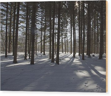 Winter Pines Wood Print by Daniel Sheldon