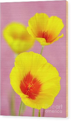 Winter Poppies Wood Print by Douglas Taylor