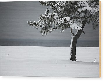 Winter Quiet Wood Print by Karol Livote