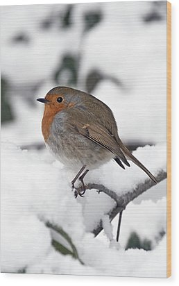 Winter Robin Wood Print by Ross G Strachan