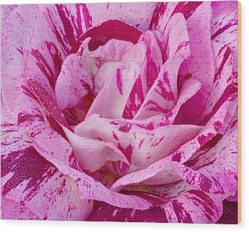 Wood Print featuring the photograph Winter Rose  by Heidi Smith