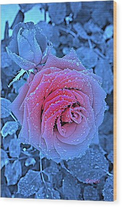 Winter-rose Wood Print