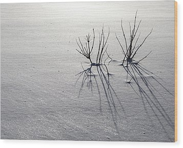 Winter Shadows Wood Print by Michele Cornelius
