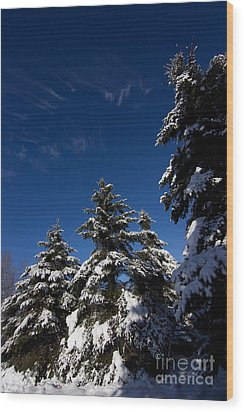 Winter Spruce Wood Print by Steven Valkenberg