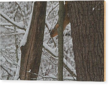 Winter Squirrel Wood Print by Dan Sproul