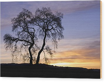 Winter Sunrise With Tree Silhouette Wood Print by Priya Ghose
