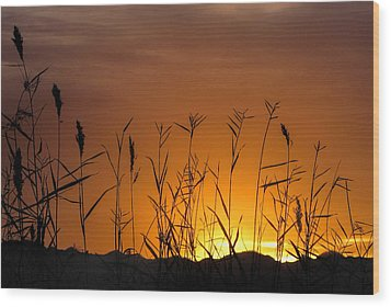 Winter Sunrise Wood Print by Tammy Espino