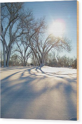 Winter Sunshine Wood Print by Alicia Knust