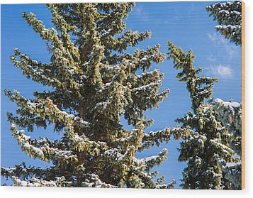 Winter Tale - Featured 3 Wood Print by Alexander Senin