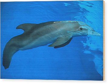 Winter The Dolphin Wood Print by Doug McPherson