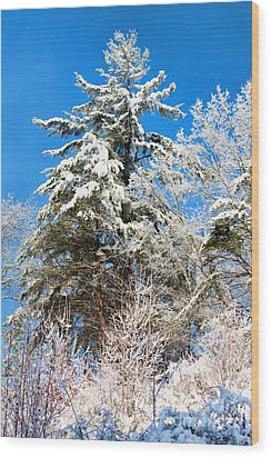 Winter Time Wood Print by Lena Auxier