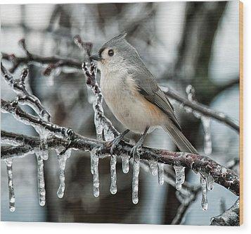 Winter Titmouse Wood Print by Lara Ellis