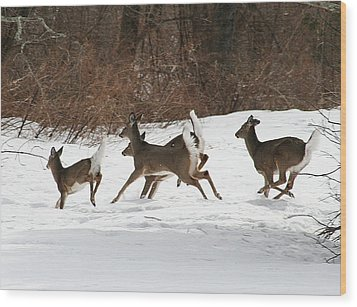 White Tailed Deer Winter Travel Wood Print