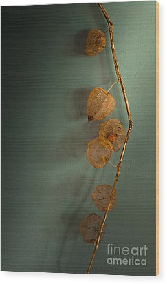 Winter Treasures Wood Print by Jan Bickerton