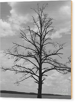 Wood Print featuring the photograph Winter Tree by Andrea Anderegg