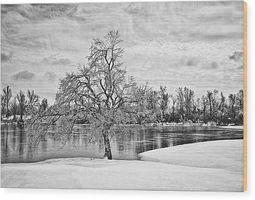 Winter Tree At The Park  B/w Wood Print