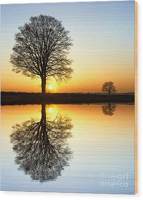 Winter Tree Reflections Wood Print by Tim Gainey