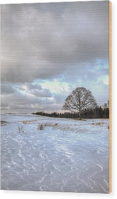 Winter Tree Wood Print by Steve Gravano