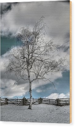Winter Tree Wood Print by Todd Hostetter