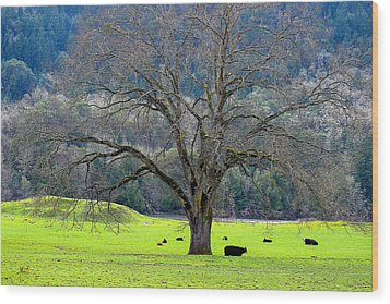Winter Tree With Cows By The Umpqua River Wood Print by Michele Avanti