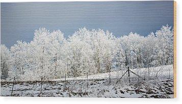 Winter Treeline Panorama Wood Print by John Haldane
