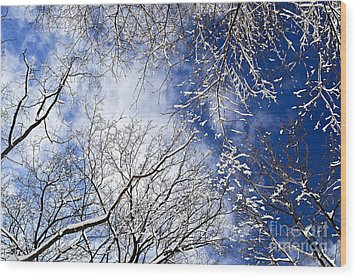 Winter Trees And Blue Sky Wood Print by Elena Elisseeva