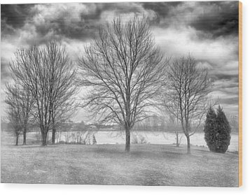 Winter Trees Wood Print by Howard Salmon