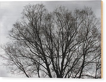 Winter Trees Number Two Wood Print by Paula Tohline Calhoun