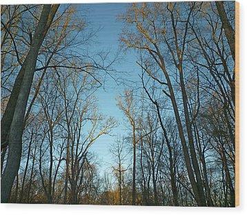 Winter Trees Wood Print by Pete Trenholm