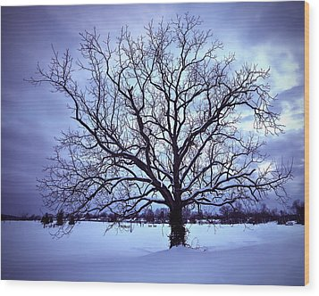 Wood Print featuring the photograph Winter Twilight Tree by Jaki Miller