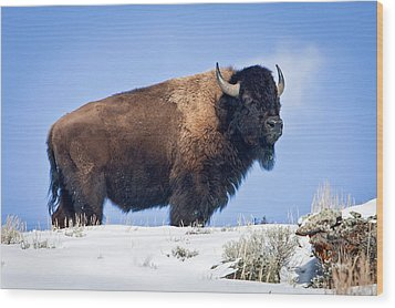 Wood Print featuring the photograph Winter Warrior by Jack Bell